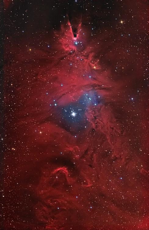 5a70685b4bbb0_NGC2264.thumb.jpg.390effe9b61df5855f29b1188b9a9d0b.jpg
