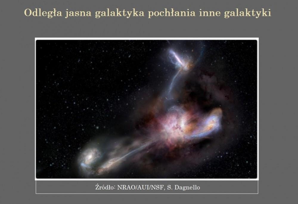 Odległa jasna galaktyka pochłania inne galaktyki.jpg