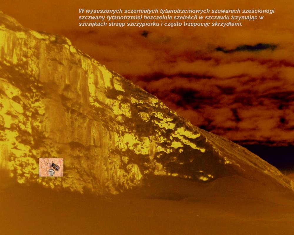 Tytanop.thumb.JPG.f146b1f7d972e96b627f3cafc7c34c51.JPG