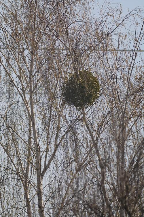 drzewo.thumb.jpg.cb2c21314b21f9a4cfd6022e5534a798.jpg