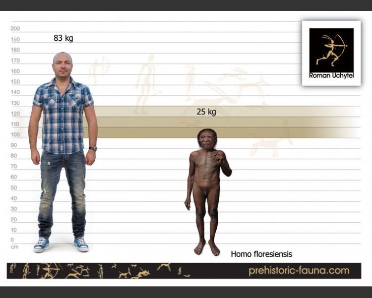 Homo-floresiensis-size-738x591.jpg