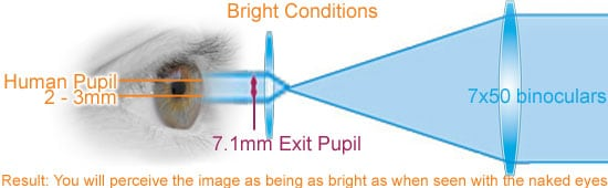 exit-pupil-eyes-optics-7x50-bright.jpg.fc3b32f2fce26e1c92eebfb26a4bf1b6.jpg