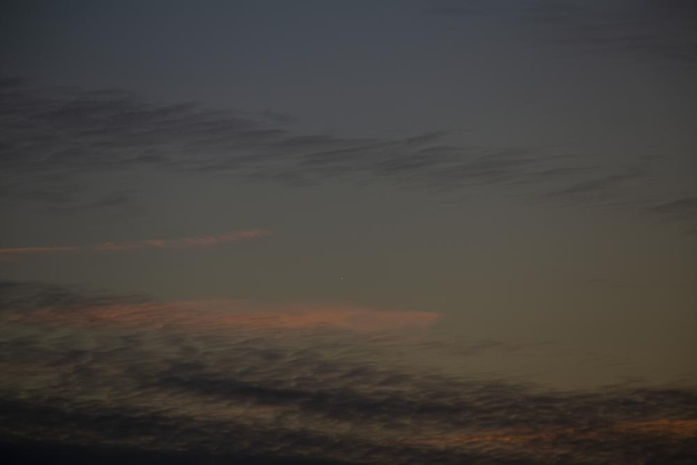 wenus-2021-05-08.thumb.jpg.b69b083ab0378a83584d87127469eaa2.jpg