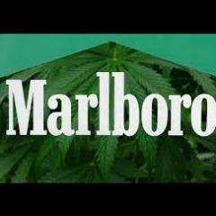 marlborothc